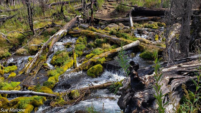 08-18-2020 Boundary Springs Hike-13.jpg