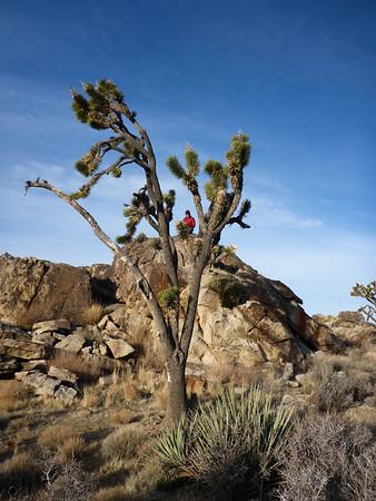 20190117 MLK Weekend Mojave Desert Preserve