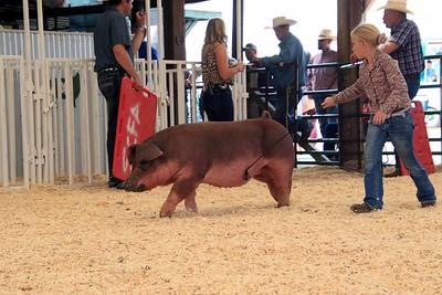 Market Swine 15