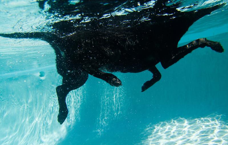 gabi swim-1079052595-o.jpg