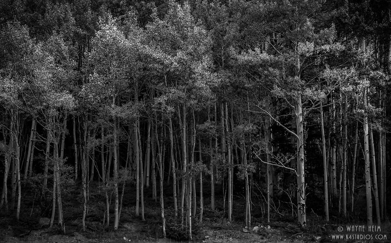 Aspen Blockade - Black & White Photography by Wayne Heim