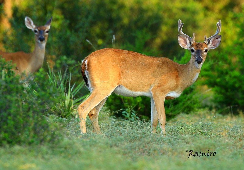 Deer Medina Lake 8-16-15 143.jpg