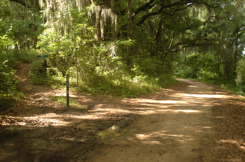 LHT #32 is to our right. To the left up the hill is West Cadillac Trail and Loblolly Trail singletrack.
