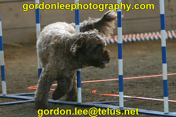 Capital Comet Dog Agility Trial Oct 2016