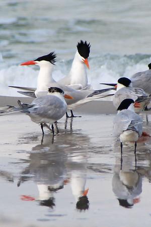 2018  Birds