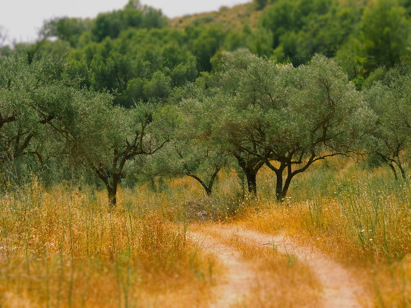 Hot Day in Andalucia 49.jpg