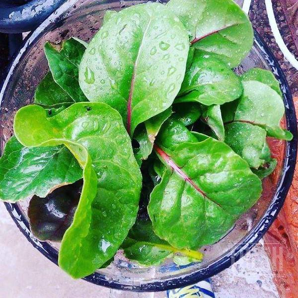 conscious-FreshGreenSmoothies_com-Vegan-Intelligent-Compassionate-raworganicvegan-plantbased-greensmoothies-OrganicGardeningArt-Art-Aeroponics1013.jpg