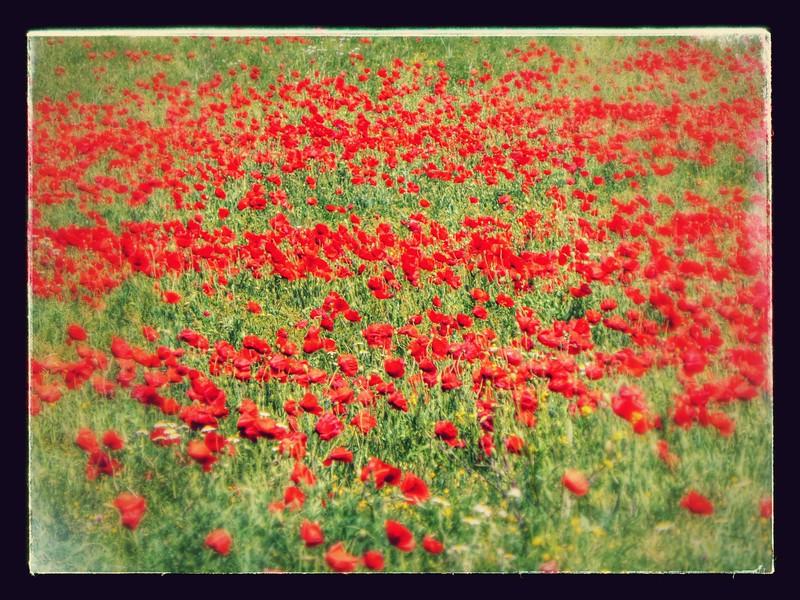 Camino Frances (2014)-107-EFFECTS.jpg