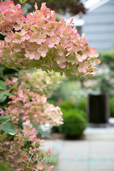 Lisa Bauer - designer's garden_1339.jpg