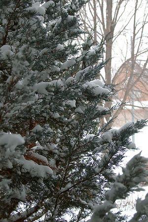 Snowstorm 2004