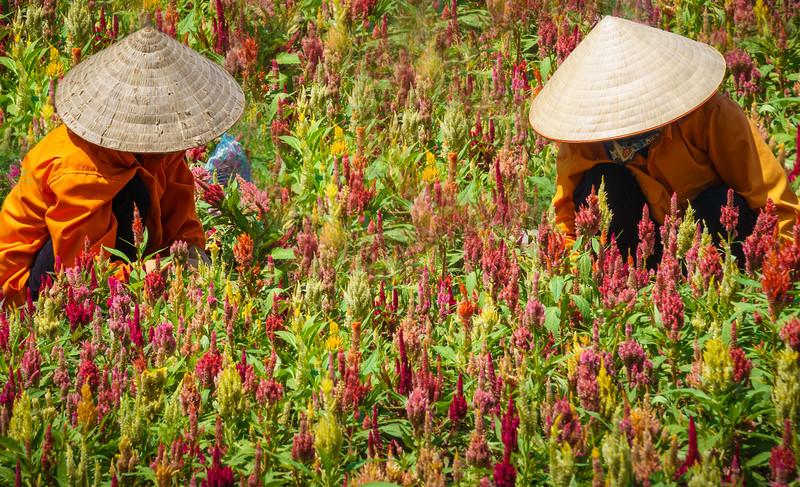 Colorful life scene around Hoàn Kiếm Lake.