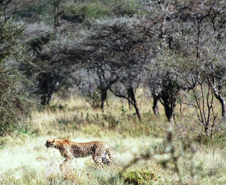 Serengeti (143).JPG