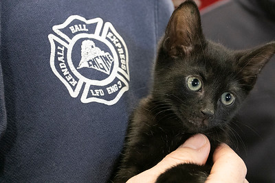 Rescued kittens visit the Leominster Fire Department, Jan. 31, 2020