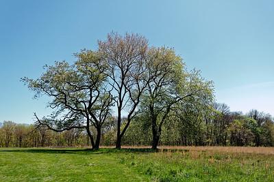 Waveny Park