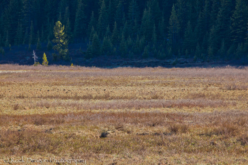 Peter Lougheed Provincial Park.