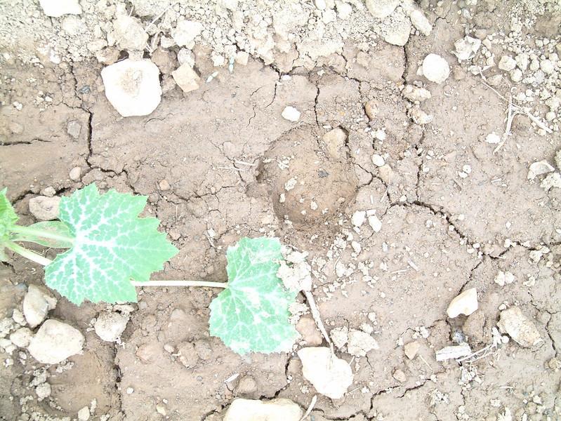 2005_06_05-02_07_25.jpg