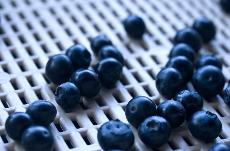 juneblueberries.jpg