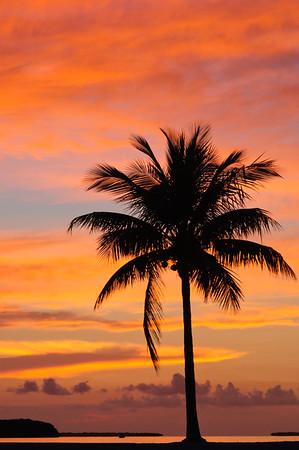 Palm silhouette2_DSC_6036-2.jpeg