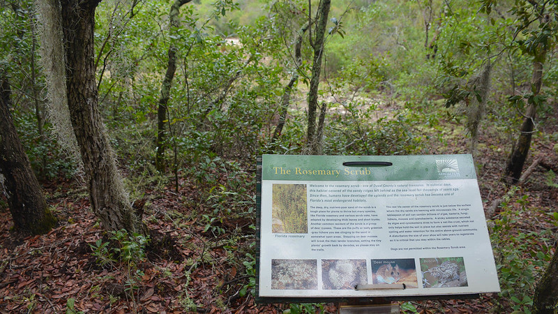 Rosemary scrub interpretive sign