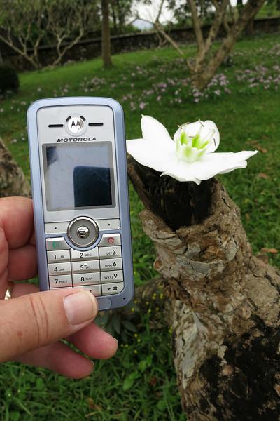 Hue_cellphone.jpg