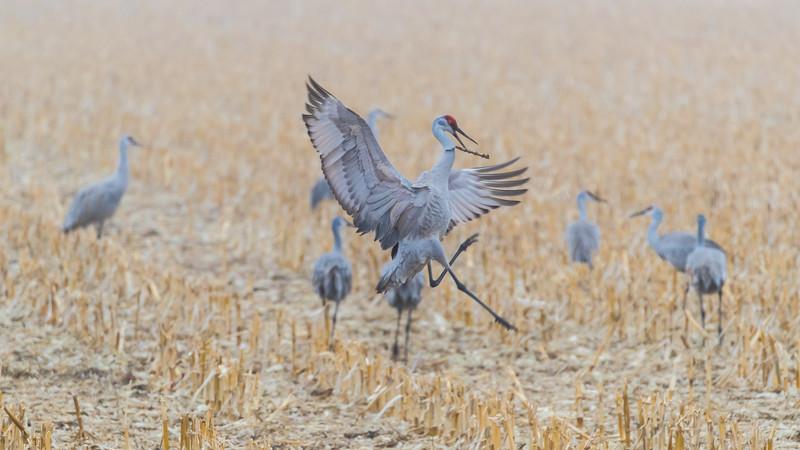 Crane18-2109.jpg