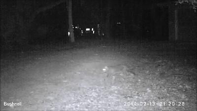 Wildlife Camera Videos