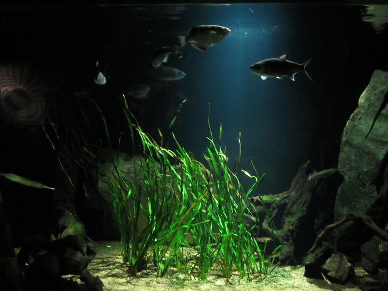 Sydney - Sydney Aquarium-46.JPG