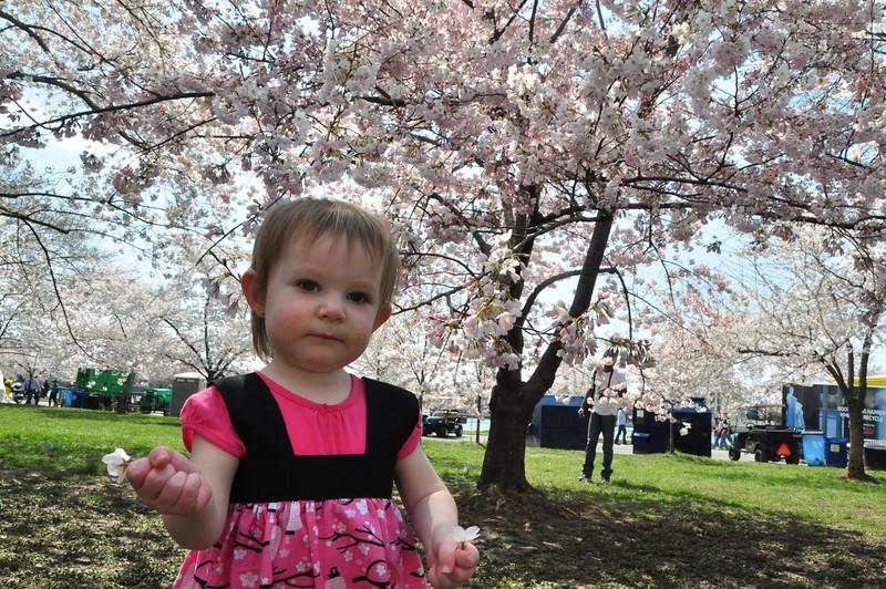 Cherry Blossoms 2014 062.jpg