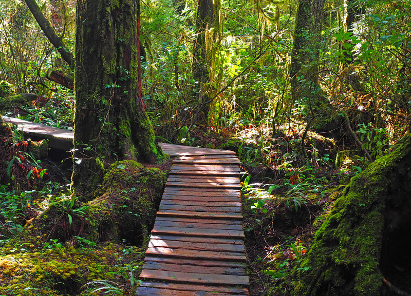 Rainforest Trail best.jpg
