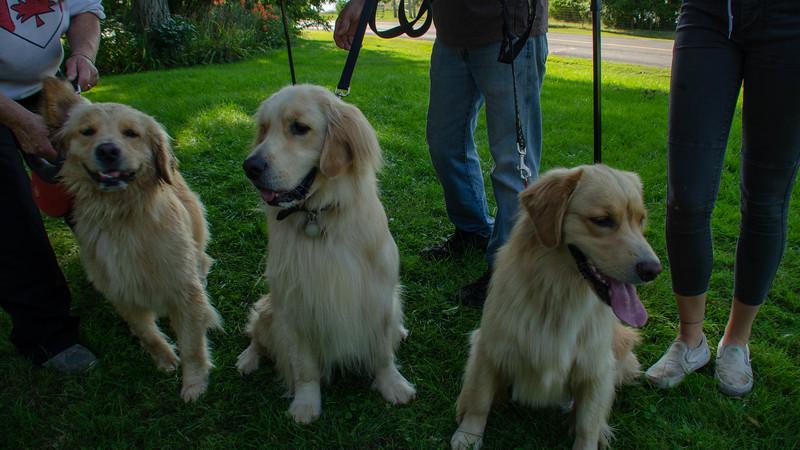 PuppyParty18-573.jpg