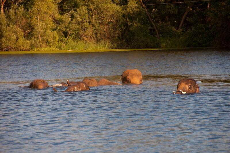 african safari Park-Canada-11.jpg