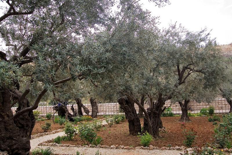 Garden of Gethsemane #2.jpg