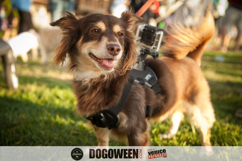 DOGOWEEN. Dogoween.com