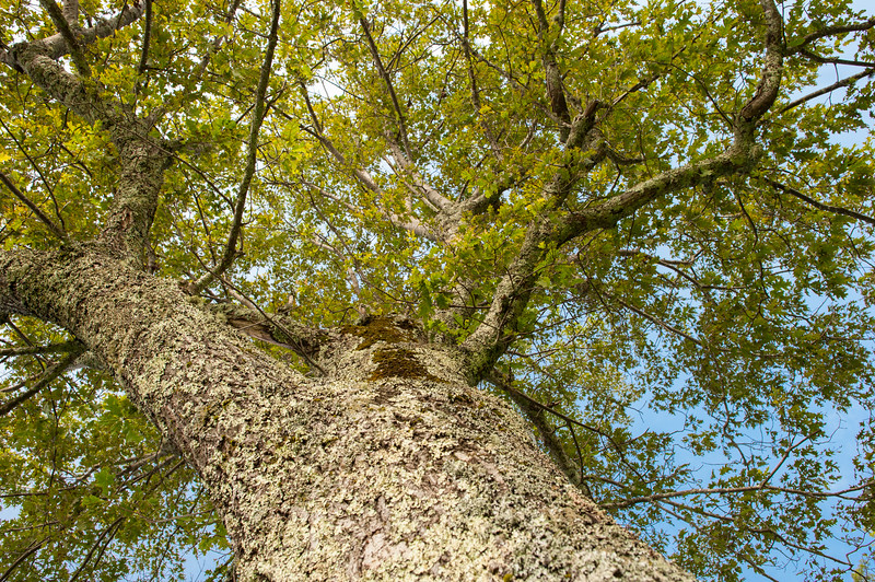 Trunk to Canopy