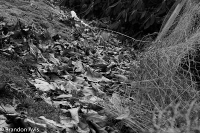 2011-2012 Ecology Shoot Sem 2