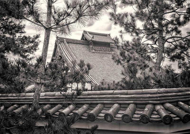 Kyoto Pines #2