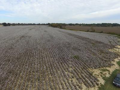 Cotton farming....Kenny Bolen