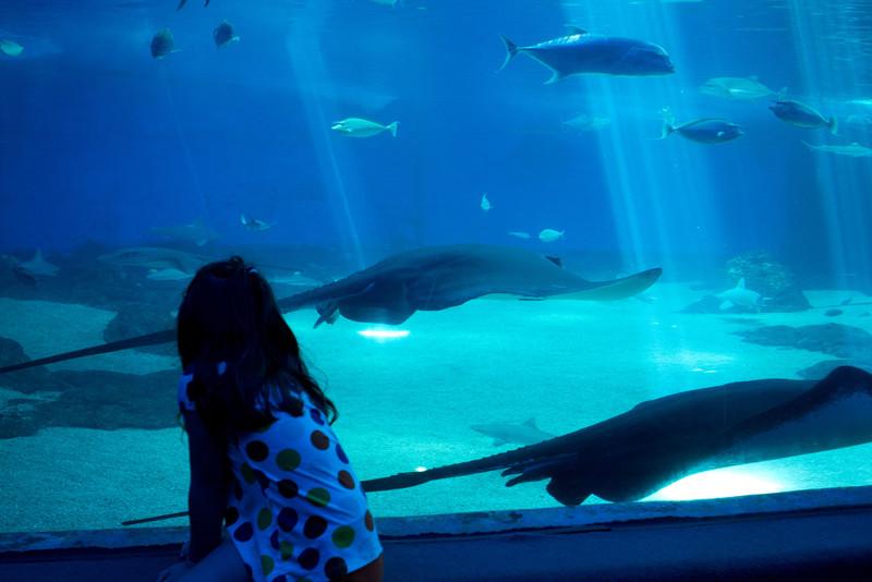 Hawaii2012-2169.jpg
