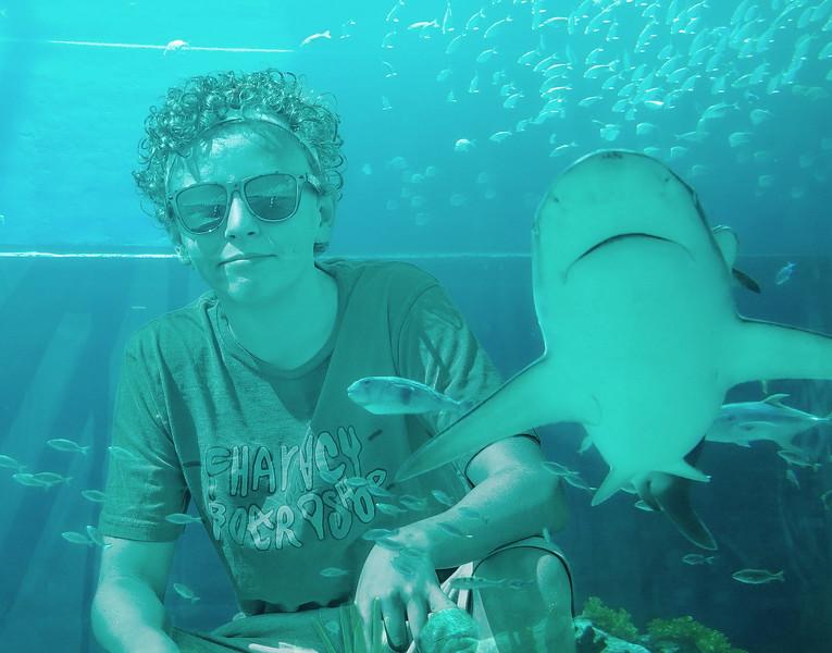 _DSC2099 Shark2.jpg