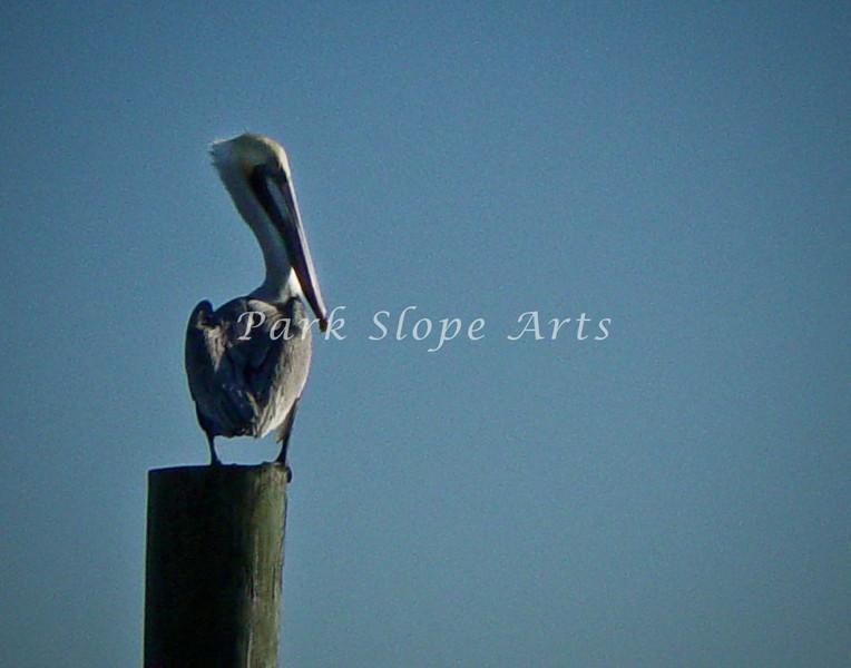 Birds-01434.jpg