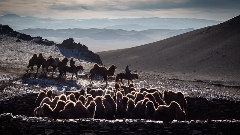 Mongolia - 2020 -1.jpg