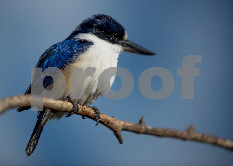 birds 5.jpg