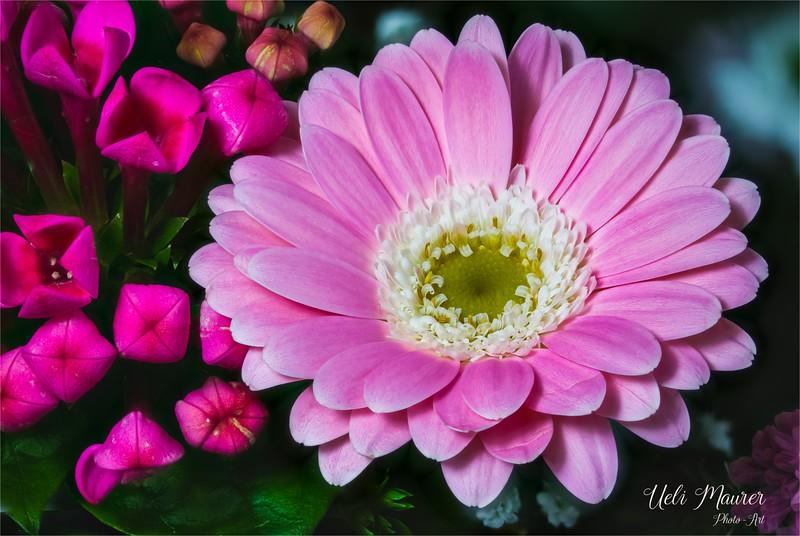 2017-12-22 Makro Blume - 0U5A2390 Stack C-Bearbeitet.jpg