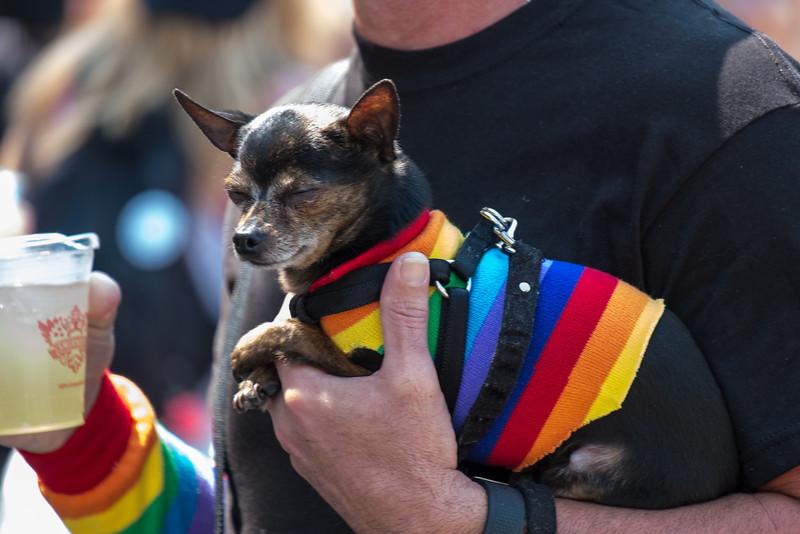 Rainbow Dog F6401.jpg