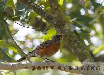 Sterling's Delaware Birds