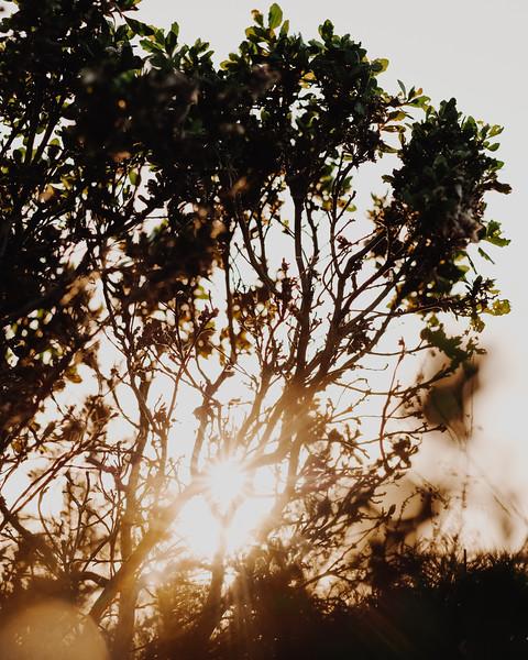 the-sun-2.jpg