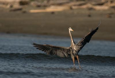 2015-04-18 Herons Eagle Esq Lagooon