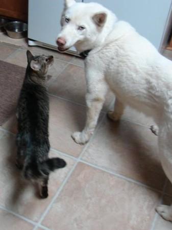 huskyandcat.jpg