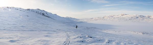 Greenland Muskox | 2017