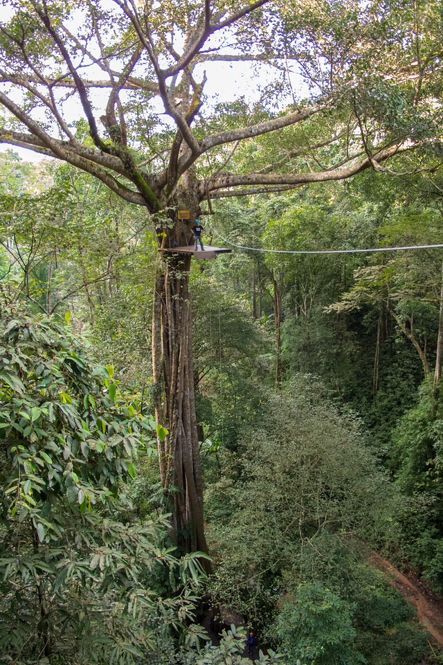 Jungle Ziplining in Thailand